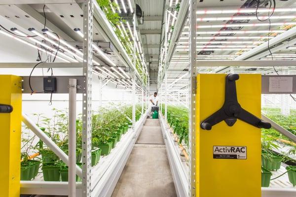 Indoor-farming-in-California_mr